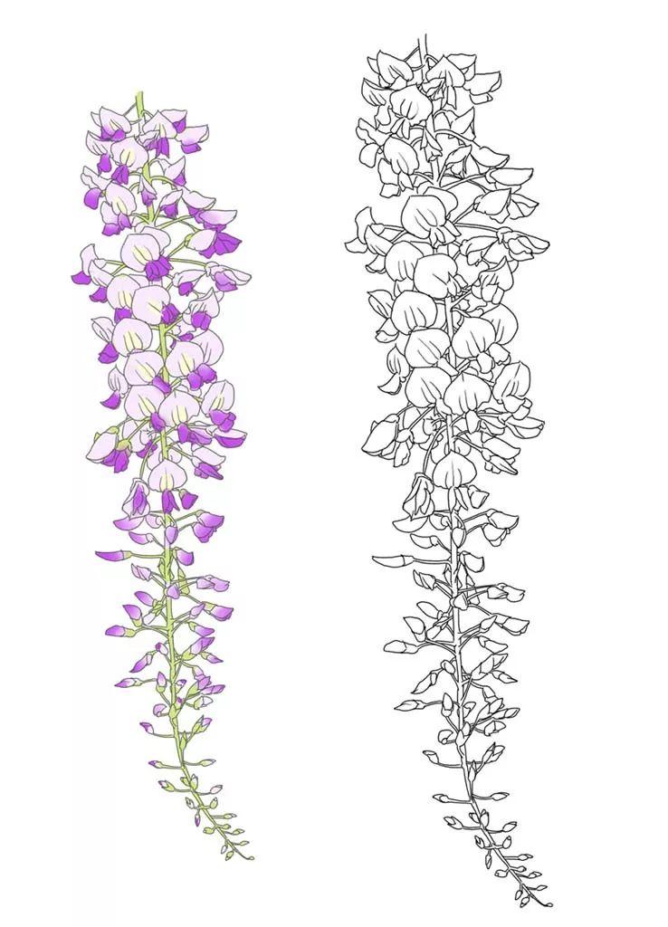 简单易学的花卉教程(附570张花卉线稿上色素材),唯美插画背景一次搞定!