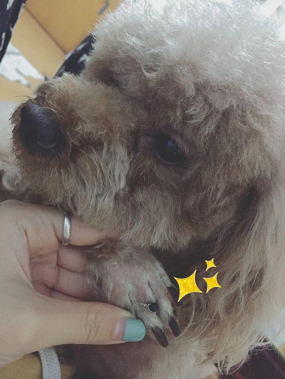 咖啡:一生只做属于一个人的小奶狗、小狼狗 | DOGTV明星专访14