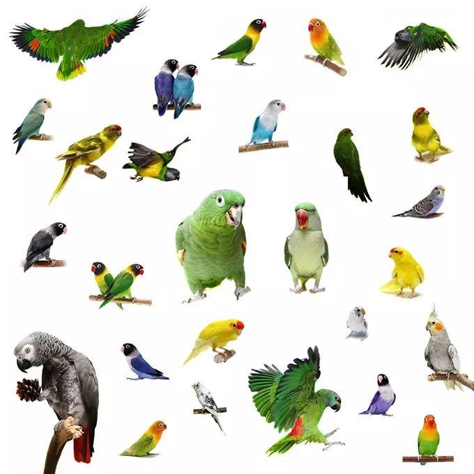 活动招募 | 园艺大讲堂新年第一讲之《宠物鹦鹉的喂养和驯化》