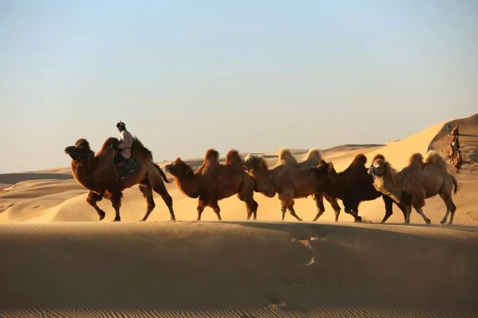 五月(第4集大结局)内蒙古摄影联盟作品展