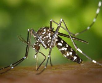 蚊子叮咬不仅痒,还会致病?!防!防!防!